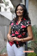 South Actress Nikitha Narayan Latest Photos 1387