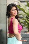 2016 Photo Nikki Galrani Tamil Movie Actress 3444