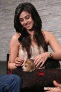 Actress Nikki Galrani 3672