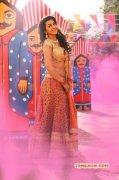 Film Actress Nikki Galrani Recent Pic 5569