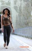 Gallery Cinema Actress Nikki Galrani 3649