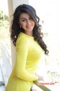 New Wallpapers Nikki Galrani Cinema Actress 1283