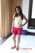 Nikki Galrani Film Actress Pic 330