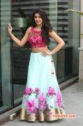 Nikki Galrani Indian Actress Latest Gallery 2525