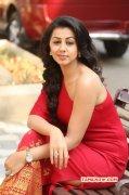 Nikki Galrani Recent Pic 570