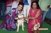 Recent Pics Nikki Galrani Tamil Actress 2892