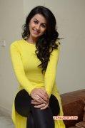South Actress Nikki Galrani New Gallery 2387