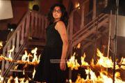 Actress Priyamani 7733