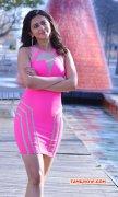 2015 Galleries Actress Rakul Preet Singh 1659