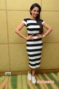 Film Actress Rakul Preet Singh 2015 Images 3706