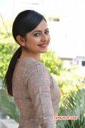 Jan 2016 Gallery Film Actress Rakul Preet Singh 9809