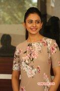 Latest Pictures Rakul Preet Singh South Actress 8853