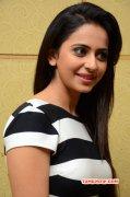 Latest Wallpaper Heroine Rakul Preet Singh 7433