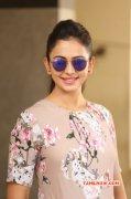 New Photos Rakul Preet Singh Movie Actress 6366