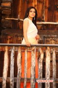 Recent Still Rakul Preet Singh Movie Actress 284