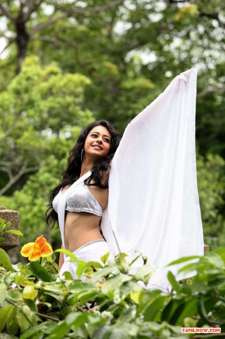 Tamil Actress Rakul Preet Photos 1608