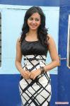 Tamil Actress Rakul Preeth Singh 8338