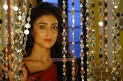 Actress Shriya Saran Stills 3739