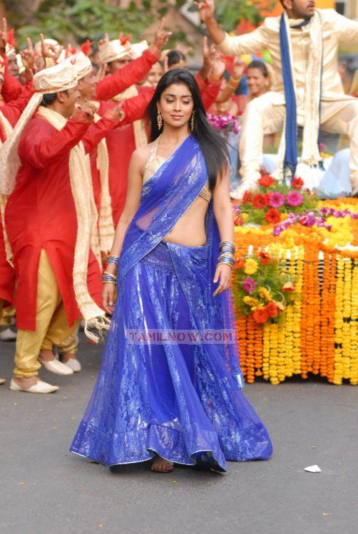 Shriya Saran 4451