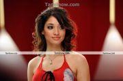 Actress Tamanna New Hot Stills6