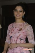Film Actress Tamanna 2014 Picture 8085