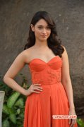 Actress Latest Pic Tamannah Hot In Orange Dress 585