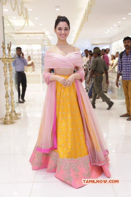 Latest Wallpaper Film Actress Tamannah 285
