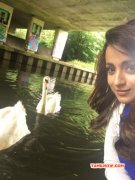 New Images Tamil Heroine Trisha Krishnan 3372