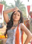 Trisha Krishnan Stills 2901