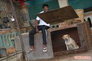 Vishal In Madha Gaja Raja 234