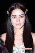 Actress Bindu Madhavi Function Photo 697