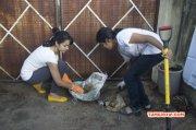 Latest Photo Trisha Participates In Swachh Bharat Event 7213